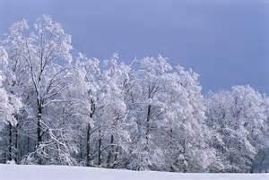 Beautiful Night Snow Scenes