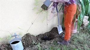 Comment Lessiver Un Mur : comment planter une bignone le long d 39 un mur youtube ~ Dailycaller-alerts.com Idées de Décoration