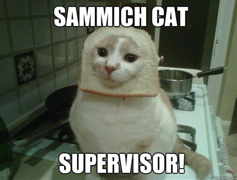 Sammich Meme - sammich cat supervisor sandwich cat quickmeme