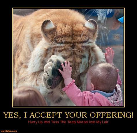 Pinterest Funny Memes - funny animal memes pinterest