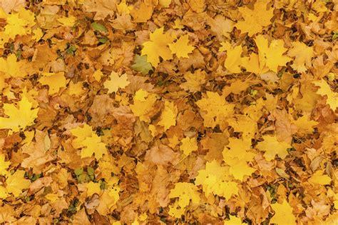 Garten Gestaltung Im Herbst by Gartengestaltung Im Herbst Natacharoussel