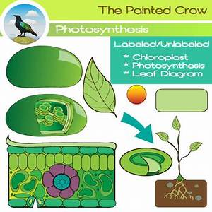 Diagram of plant photosynthesis choice image how to guide and refrence unlabeled diagram of photosynthesis choice image how to ccuart Choice Image