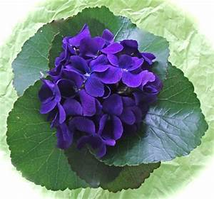 Fragrant Violets | Leslie Land - in Kitchen and Garden and ...