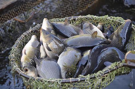 Lai zivīm pilnie Latvijas ūdeņi kļūtu par nacionālo ...