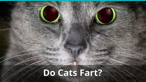 Can Cats Fart Pass Gas Flatulate Or Let One Rip