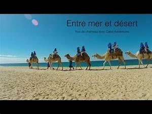 Course De Chameau : billy le chameau entre mer et d sert los cabos youtube ~ Medecine-chirurgie-esthetiques.com Avis de Voitures