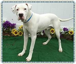 SATELLITE | Adopted Dog | 581648 | Marietta, GA | Great ...