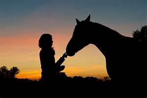Bilder Von Pferden : sonnenuntergang foto bild tiere haustiere pferde esel maultiere bilder auf fotocommunity ~ Frokenaadalensverden.com Haus und Dekorationen