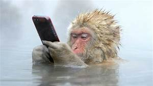 Funniest Monkeys