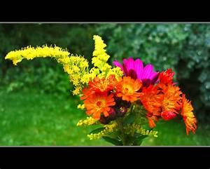 Welche Blumen Blühen Im August : blumen august fabulous welche blumen blhen im august berprfung funktionen und bewertungen with ~ Orissabook.com Haus und Dekorationen