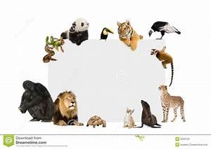 Wild Animals Together
