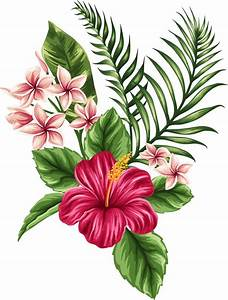 Drawn plant tropical flower - Pencil and in color drawn ...
