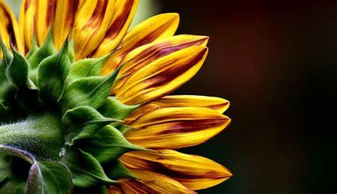 semi di fiori da piantare piantare correttamente i semi di fiori si noti questo