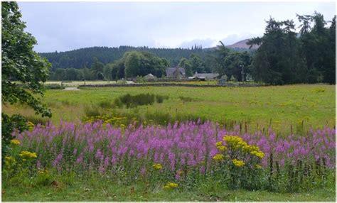 Typisch Für Schottland by Typisch F 252 R Schottland Die Erika Und Diese Gelben Blumen