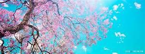 Cherry Blossom Facebook Timeline Cover