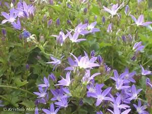 Was Sind Frühlingsblumen : notizblog kristinas notizblog ~ Whattoseeinmadrid.com Haus und Dekorationen