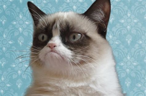 Fluffy, Grumpy Cat  We Know How To Do It