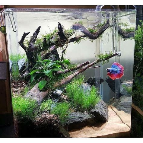 874 Best Aquascaping  Planted Tanks  Aquariums Images On