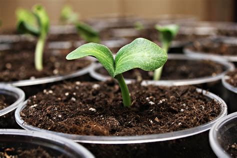 Garden Staples You Should Start Indoors Before Spring