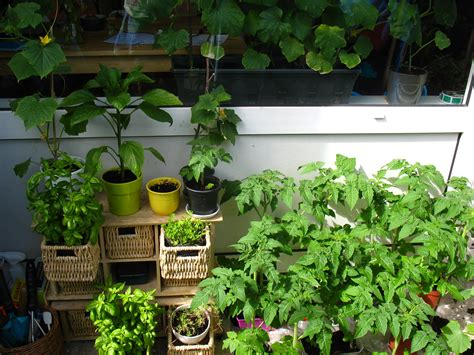 Urban Gardening In Amsterdam-expat Republic
