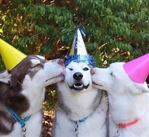 Grab The Unique Funny Birthday Memes Dog