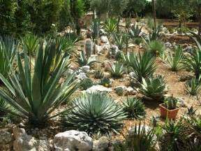 Giardini rocciosi forum di giardinaggio