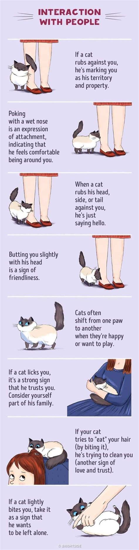 cat behavior cat behavior decoded learn what your cats moves mean