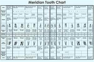 Tooth Chart  Understanding Meridians