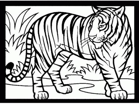 Harimau Mewarnai Gambar