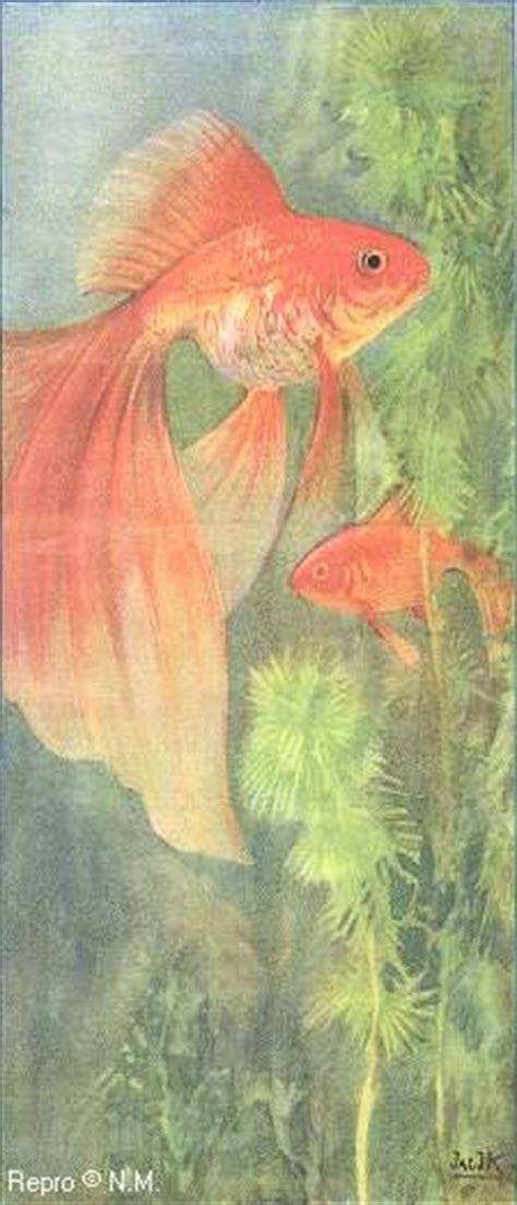 goldfische vergesellschaftung