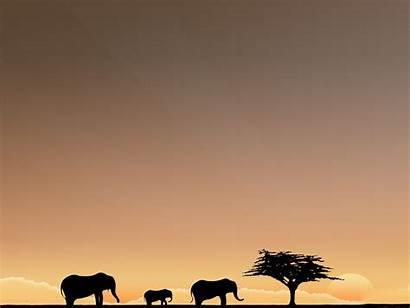 Freedom Desktop Safari African Background Wallpapers 3d