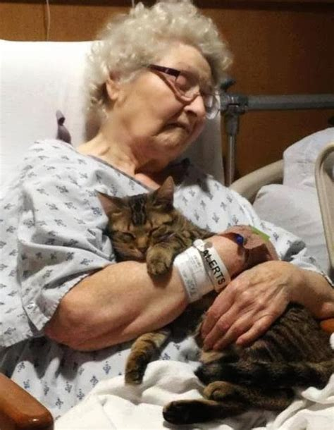 therapy cats cat therapy pictures that i love pinterest