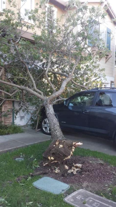 heavy winds  trees  damage  bay