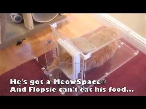 meowspace cat feeder litter box control station youtube