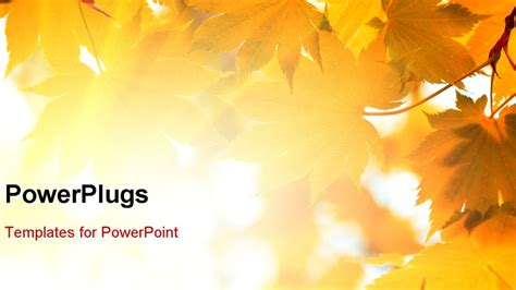Autumn Leaves Fall Backgrounds Powerpoint by Fall Powerpoint Templates Free Yasnc Info