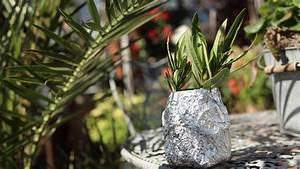 Oleander Stecklinge Wurzeln Nicht : so pflanzen sie die stecklinge ein bild 7 ~ Lizthompson.info Haus und Dekorationen