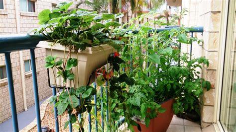 Urban Balcony Gardening Inspirations For Newbies Garden