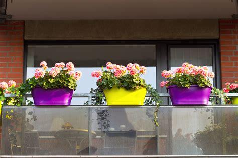 blumen für den balkon geranien auf dem balkon 187 pflanzen und pflegen