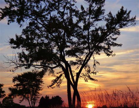 sunset  tree silhouette news