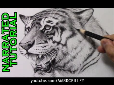 draw  tiger narrated step  step tutorial youtube