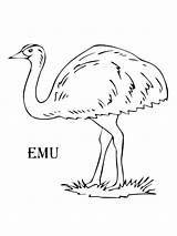Emu Coloring Pages Drawing Print Printable Birds Colors Getdrawings Bright Supercoloring sketch template