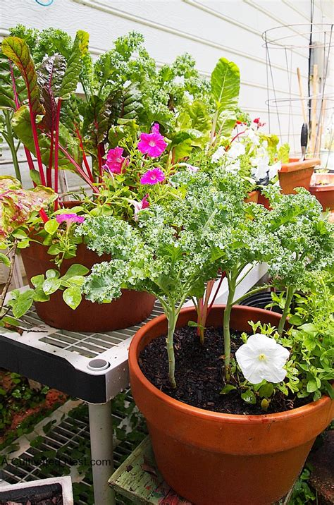 container gardening vegetables my container vegetable garden