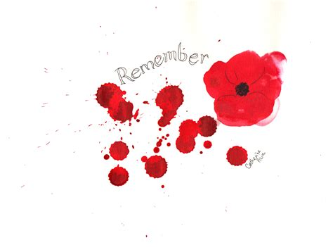 images poppies remembrance remembrance day poppy catherine pain