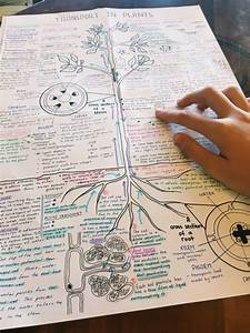 Studium Note Berechnen : studyzors biology notes transport in plants college ~ Themetempest.com Abrechnung