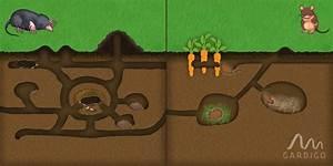 Maulwurf Im Garten Loswerden : w hlmaus oder maulwurf so unterscheiden sie wer ihren garten umbuddelt blog gardigo ~ Frokenaadalensverden.com Haus und Dekorationen