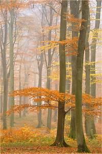 Die Farben Des Herbstes : die zarten farben des herbstes forum f r naturfotografen ~ Lizthompson.info Haus und Dekorationen