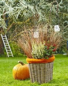 Carex Hachijoensis Evergold Pflege : seggen im topf pflanzen und pflegen mein sch ner garten ~ Lizthompson.info Haus und Dekorationen