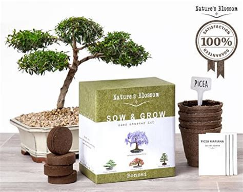 nature s blossom bonsai tree germination kit nifty homestead