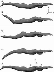 Single Motion Cycle T Of Human Dolphin Kick Swimming