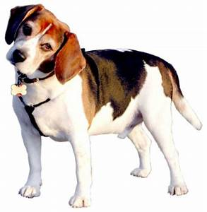 hipinioncom o view topic i may have a bedbug infestation With bed bug canine